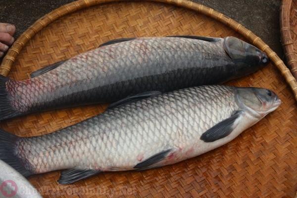 Món ăn từ cá trắm đen chữa yếu sinh lý
