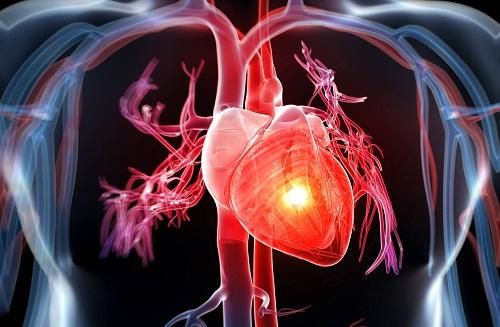 Thận yếu gây ảnh hưởng đến tim mạch