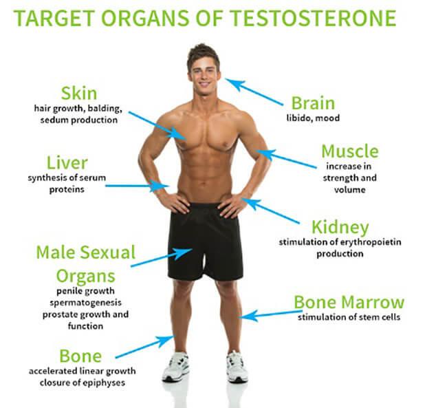 Bổ sung hormonenội tiết tố testosteron cải thiện rối loạn cương dương