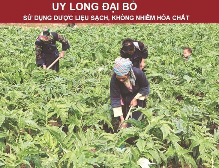 Uy Long Đại Bổ chữa yếu sinh lý cho nghệ sĩ Tùng Dương đảm bảo tính an toàn tuyệt đối nhờ nguồn dược liệu sạch